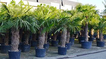 Arbres et plantes méditerranéennes