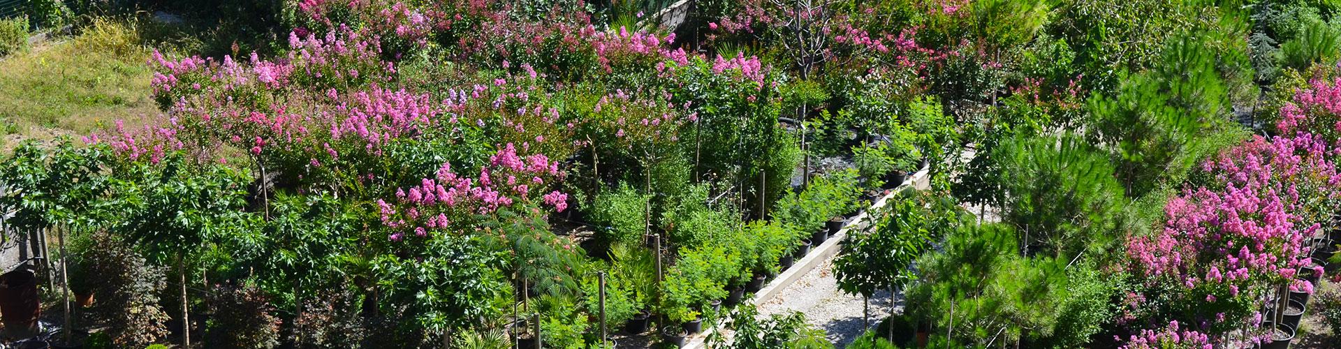 plantes méditerranéennes - Pépinière d'Azay-sur-Cher